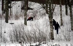Riksmordkommissionens chef Dag Andersson skickar efter siaren Hanse Rehnmans tips likhunden Folke upp mot brunnslocket, 20 meter ovanför den plats där man letade i Jimmy fallet förra veckan, och efter dagvattenledningen. FOTO BOO ERICSSON
