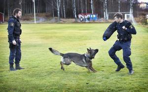 Poliserna Hans Lambertsson och Kristian Dalsten är Hälsinglands färska hundförare. De kommer att utgå från Hudiksvall.