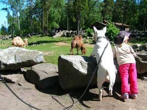 6. BÄSTISAR I FURUVIK. Bullterriern Berta och kompisen Julia har samma intresse för djur.  Inskickad av Jessica Öström, Storvik