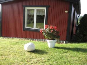 Svampen är nu 116 cm i omkrets och växer flera centimeter varje dag.