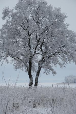 En härlig vinterdag på Tidö-Lindö.