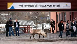 Det väckte förstås uppståndelse när renkon besökte Mittuniversitet i Sundsvall i tisdags.