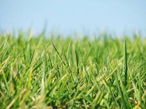 Snart är det dags att frisera gräsmattorna.ARkivbild: scanpix