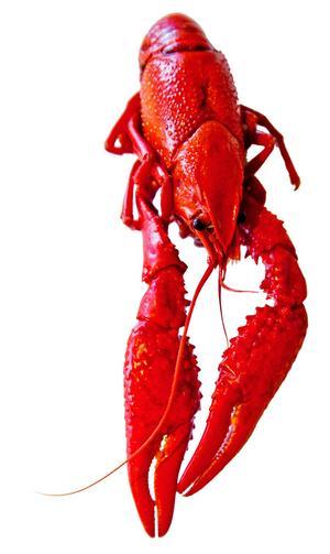 Lobster SeafoodSpräcklig i färgen, ser naturliga ut. Trevlig konsistens. Minus för att köttet sitter fast i skalet. Ursprung: Kina Pris: 120 kr/paket Butik: Ica Supermarket CityBetyg: 4