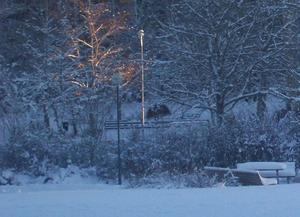 Vinterkvällens sol föll snett så att det lyste endast  på ett träd  .