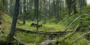 I dag finns det 182 naturreservat i länet. Fler ska det bli.
