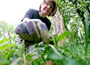 Irene Agerbjer plockade nässlor för att göra pannkakor med en annorlunda touch.