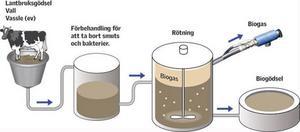 Gödsel, vall och eventuell vassle omvandlas genom en rötningsprocess till fordonsbränsle i biogasanläggningen.  Proportionerna är cirka 40 procent gödsel, 25 procent vall, 25 procent vassle samt diverse.