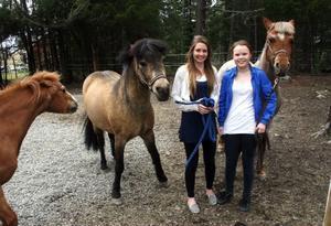 """Hedda Bångman och Ellinor Olofsson går i sjuan i Änge skola i Offerdal. Nu tänker de starta en egen ridklubb för alla ridintresserade i Offerdalsbygden. """"Går det vägen kommer vi också att försöka bygga ett ridhus"""", säger de båda i hästhagen hemma hos Ellinor i Ede där de får sällskap av från vänster Senith, Maskot och Ella Cssandra Trams. Hedda har också en häst  hemma i Kaxås, Starlight.              Foto: Stefan Nolervik"""