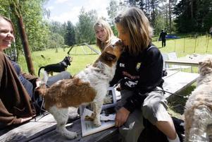 Mathilda Holm får en puss av jack russel terriern Magnus Hedman medan Moa Öman och Mikaela Berglund tittar på.