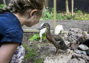 Elma, dotter i familjen Järnmark, pratar med James-Tony, löpanka.