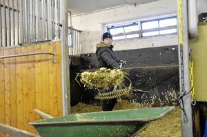 Hoppas på bättre tider. Ridföreningarna i kommunen hoppas på en ny, gemensam ridanläggning inom kort. –Det är inte optimalt som det är just nu, säger Yvette Rydén, hästskötare och ridlärare på Linde ridskola.