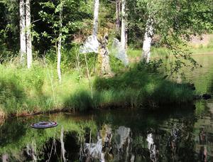 En älva speglar sig i  vattnet vid Kolhusudden.