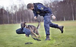 Ippe och Hans Lambertsson tränar gripande/fasttagande. Ippe älskar att leka med den stora tjocka skyddsärmen som han ska bita sig fast i.