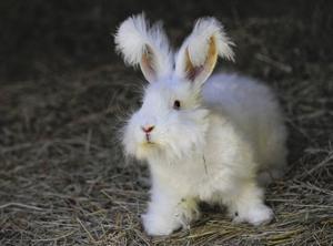 Mirdza Actins upprörs över hur vissa behandlar kaniner.