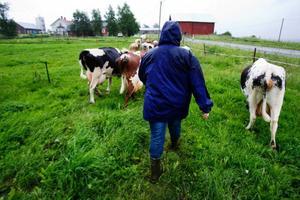 Åse Bixo har precis tagit över gården från sin mor som ansvarat för verksamheten de senaste 30 åren.
