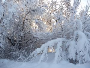 Vacker vinterpromenad längs Kvisthamraviken.