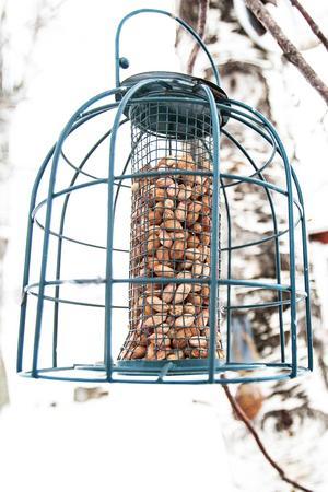 Den fyllda fröbehållaren lockar många fåglar till gården.