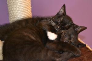 Syskonkärlek på Huskatten, Klara tycker brorsan Kojak är en utmärkt kudde.