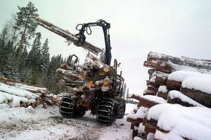 Skogs- och Träfacket har försökt hitta en lösning tillsammans med sina arbetsgivare men stupat på lönediskussionerna.Foto: hans råger bergström