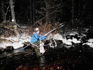 Med håv och pannlampa fick Liam Danielsson sin första sik. I fredagskväll provade föreningen Unga sportfiskare i Jämtland på mörkerfiske.