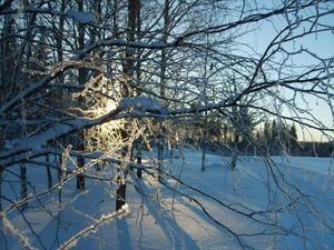 Det gnistrade i träden när jag åkte skidor på golfbanan söndag eftermiddag.