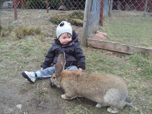 Underbara vårdag, solen sken och fåglarna kvittrade. Då passade vi på att åka ut på en liten utflykt. Vi träffade då denna ur-gulliga och jätte snälla Jätte kanin. Han var inte alls skygg och Samuel fick mer än gärna klappa honom. Underbart med vår och djur!
