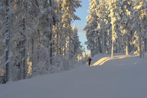 Fjället runt är det klassiska längdskidspåret som nu åter löper runt Idre Fjäll, ett spår som Länsstyrelsen nu beviljat ett regionalt företagsutvecklingsstöd för.