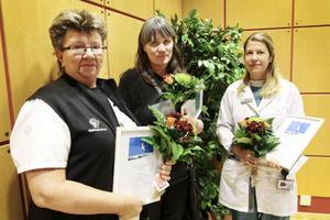 Tre verksamheter delar på Ingrid Lindbergs stipendium i år. Sjukhuskyrkan, Hjälpmedelscentralen och Sjukhusapoteket delar på 10 000 kronor för sina insatser för att förbättra den palliativa vården, det vill säga vården av obotligt sjuka och döende patienter, i Jämtlands län. Stipendiet togs emot av Kerstin Söderberg (Sjukhuskyrkan), Katarina Agerberg (Hjälpmedelscentralen) och Annelie de Sinegube (Sjukhusapoteket). Stipendiet delas ut av Jämtlands läns cancer- och omvårdnadsfond i samarbete med Storsjögläntan. Utdelningen skedde i samband med den årliga utbildningsdagen i palliativ vård som genomfördes på torsdagen.