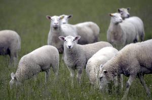 Svenska bönder kan drabbas av nya avgifter.