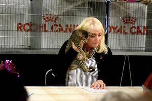 En Cornish Rex bedöms av domaren Elin Hoffman.