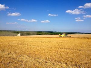 Vete är en av flera grödor som Stefan Stolt odlar i Ukraina.