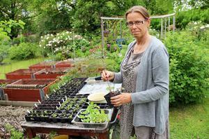 Anette Persson i barnkammaren.  Hon frösår så många plantor att alla  inte ryms i trädgården. De som blir över säljer hon.