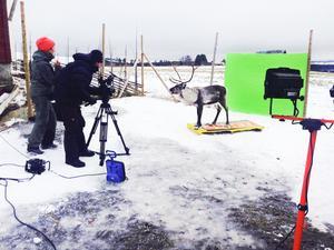 Ulrika Andreasson instruerar Rudolf via  klicker-metoden hur han ska posera under en reklaminspelning.