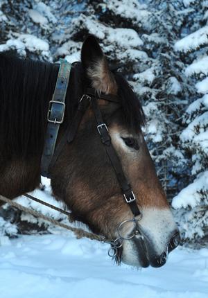 Hästarna är viktiga för verksamheten i Tur och ton.