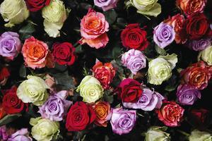 Ett fång rosor till alla de i länet som fyller 100 år eller mer under juli månad.