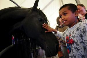 Sharif Gusta, 9 år, från Tallnäs var på cirkus för första gången. Han tyckte att hästarna var både fina och duktiga och kanske vill han jobba på en cirkus när han blir stor.