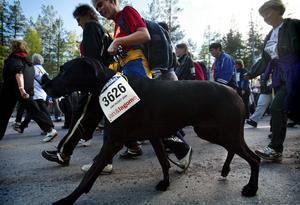 En hund bland löpare. 2004.