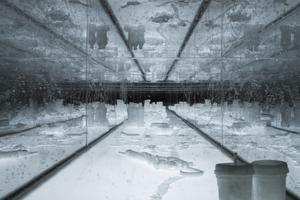 Bilden är tagen från ett av Aiko Miyanagas tidigare verk.