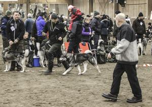 Lennart Holmsten följde med i ringen, och spanade in hundarnas företräden.