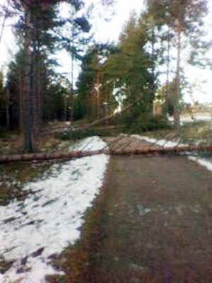 Så här såg det ut på gång/cykelvägen bort till Leksand Strand.