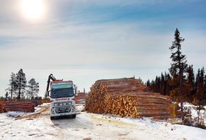 Runt 2 000 kubikmeter virke avverkades i skogarna vid Rytjärn mellan Hede och Särvsjö.