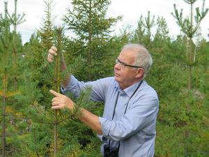 Kjell Danell, viltforskare och professor emeritus, kommer snart ut med en bok som bland annat handlar om vad viltet betytt för människor och samhället.