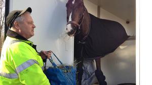 Hästen Lasse får hö i väntan på räddningstjänsten.