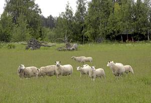 Öppet landskap. Något som är hotat av vargens utbredning, menar debattörerna.Arkivfoto:  Fredrik Sandberg / TT