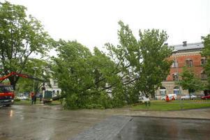 Med hjälp av kran faller trädet åt rätt håll.