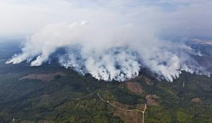 Skogsbranden som härjar i Sala och Surahammars kommuner har spridit sig till Jämtland. Partiklarna från branden har gjort att även jämtlänningarna kan känna brandlukten från området.