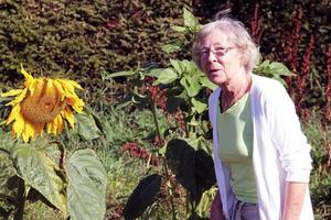 Vivian Nordström fick de ståtliga solrosorna av sina barnbarn. I övrigt har hon satsat på potatis.