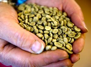 Kaffebönorna får sin vackra bruna färg efter att de rostas i den gamla maskinen från 1929.
