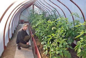 Man får faktiskt riktig kyrkkänsla bland tomaterna i Magnus växthus.Foto: Ingvar Ericsson